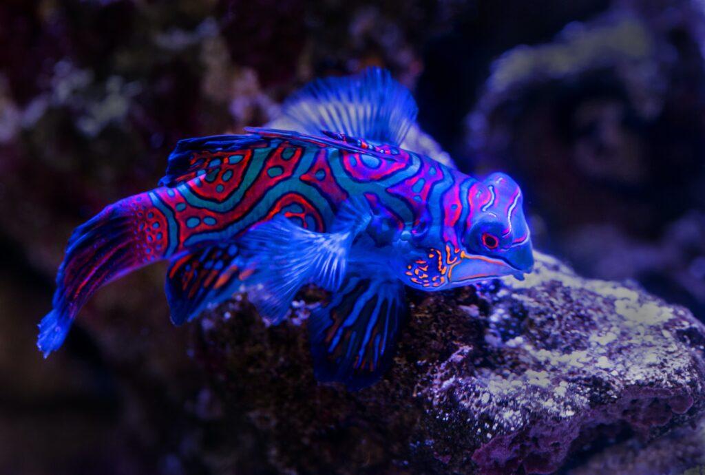 akwarium morskie - jak zacząć