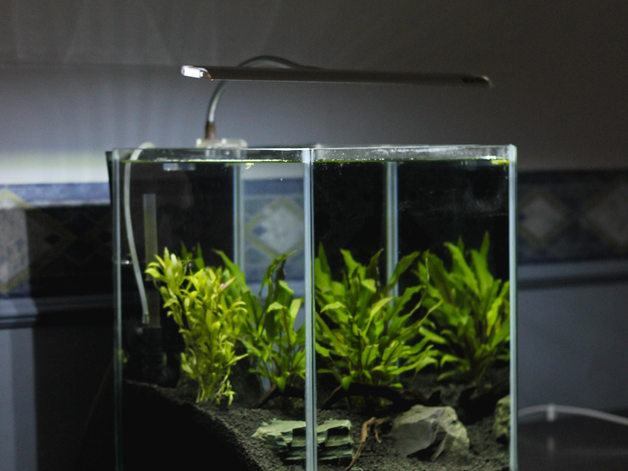 Szklana pokrywa do akwarium