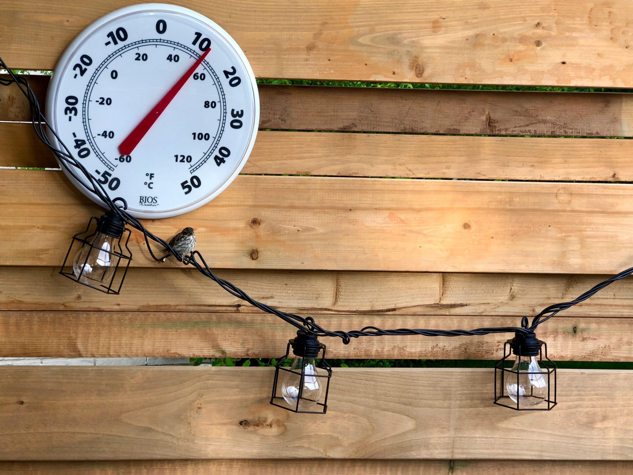 Temperatura wody w akwarium, jaka powinna być?