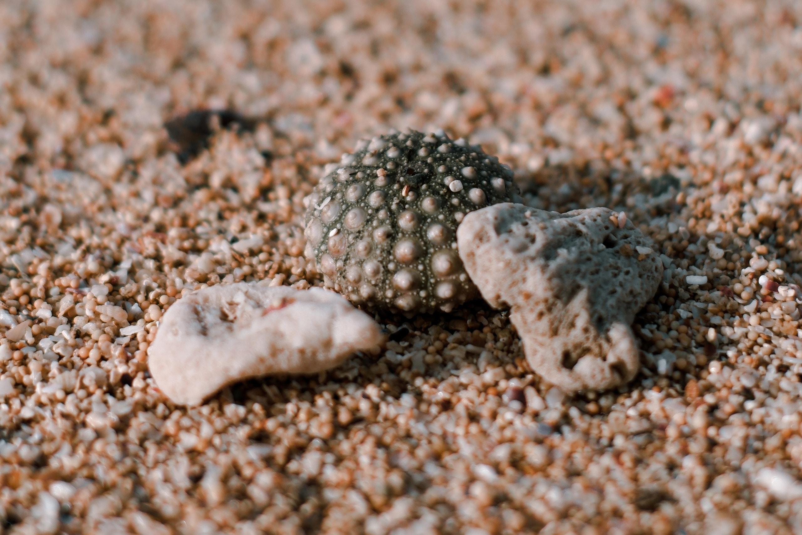 Akwarium, wybrać żwirek czy piasek